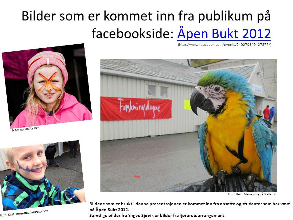 Bilder som er kommet inn fra publikum på facebookside: Åpen Bukt 2012 (http://www.facebook.com/events/240279349427877/)