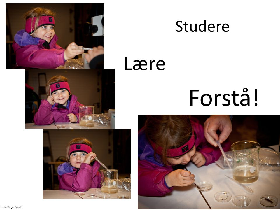 Studere Forstå! Lære Accessable science Adorable girl 
