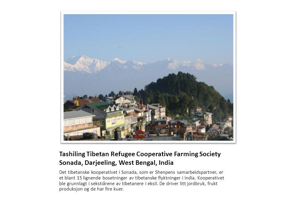 Tashiling Tibetan Refugee Cooperative Farming Society Sonada, Darjeeling, West Bengal, India