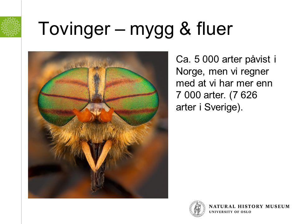 Tovinger – mygg & fluer Ca.