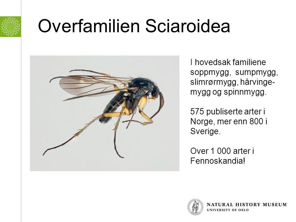 Overfamilien Sciaroidea
