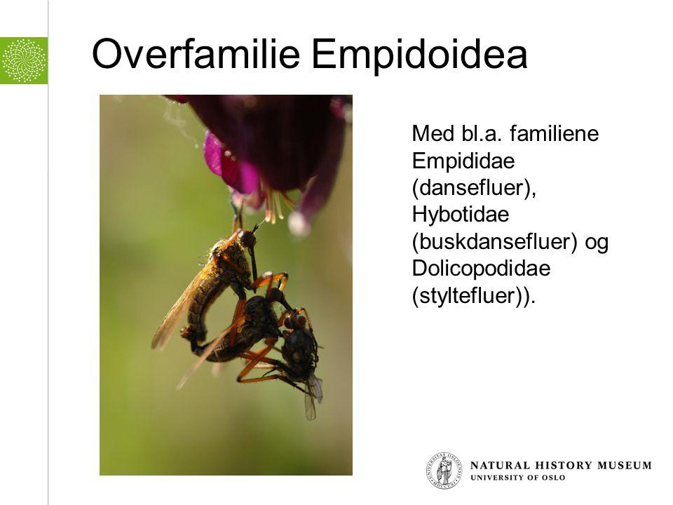 Overfamilie Empidoidea