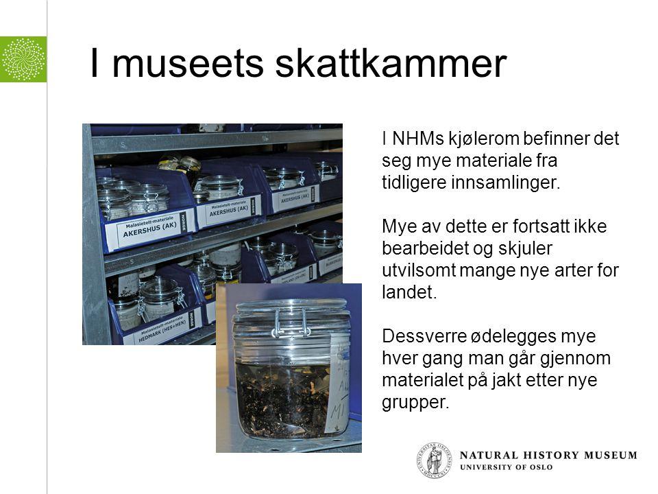 I museets skattkammer I NHMs kjølerom befinner det seg mye materiale fra tidligere innsamlinger.