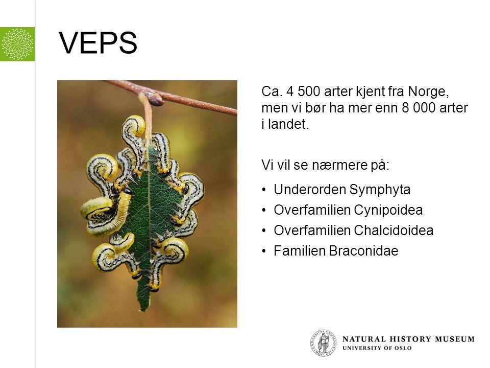 VEPS Ca. 4 500 arter kjent fra Norge, men vi bør ha mer enn 8 000 arter i landet. Vi vil se nærmere på: