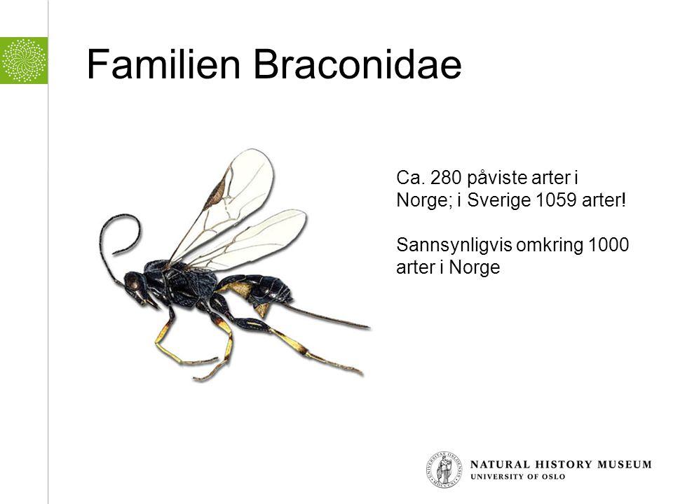 Familien Braconidae Ca. 280 påviste arter i Norge; i Sverige 1059 arter.