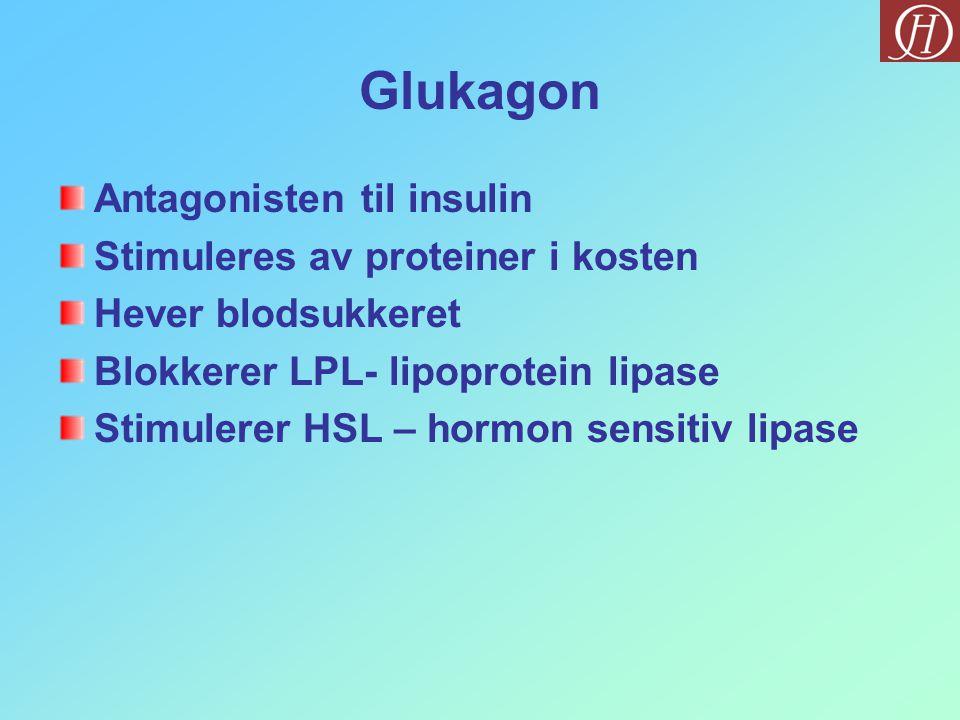 Glukagon Antagonisten til insulin Stimuleres av proteiner i kosten