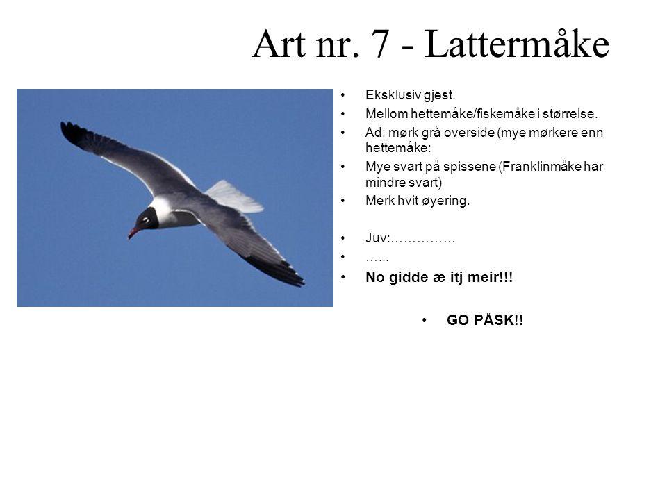 Art nr. 7 - Lattermåke No gidde æ itj meir!!! GO PÅSK!!