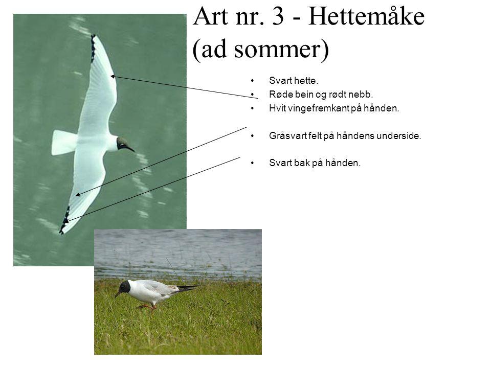 Art nr. 3 - Hettemåke (ad sommer)
