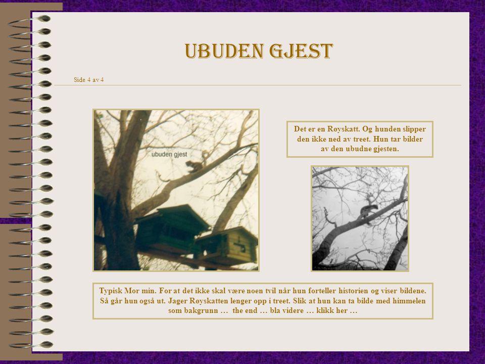 Ubuden gjest Side 4 av 4. Det er en Røyskatt. Og hunden slipper den ikke ned av treet. Hun tar bilder av den ubudne gjesten.