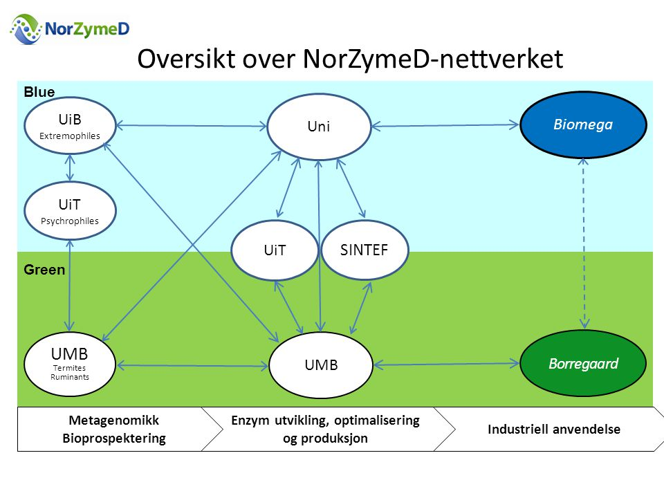Enzym utvikling, optimalisering og produksjon Industriell anvendelse