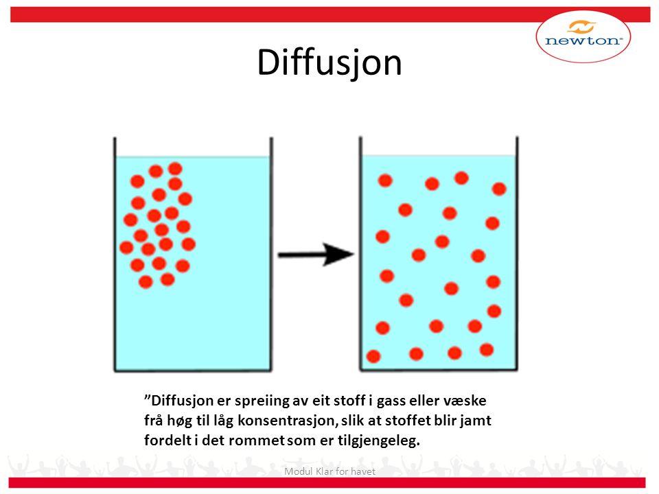 Diffusjon