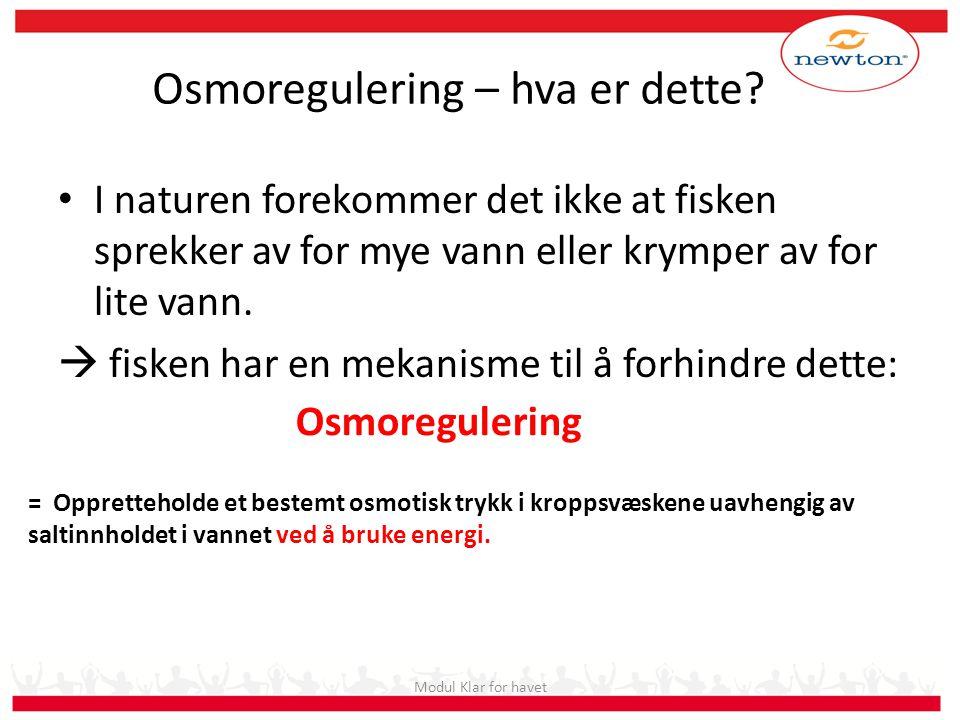 Osmoregulering – hva er dette