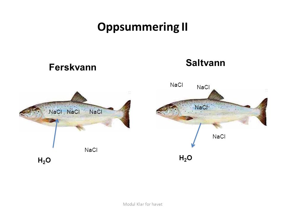 Oppsummering II Saltvann Ferskvann H2O H2O NaCl NaCl NaCl NaCl NaCl