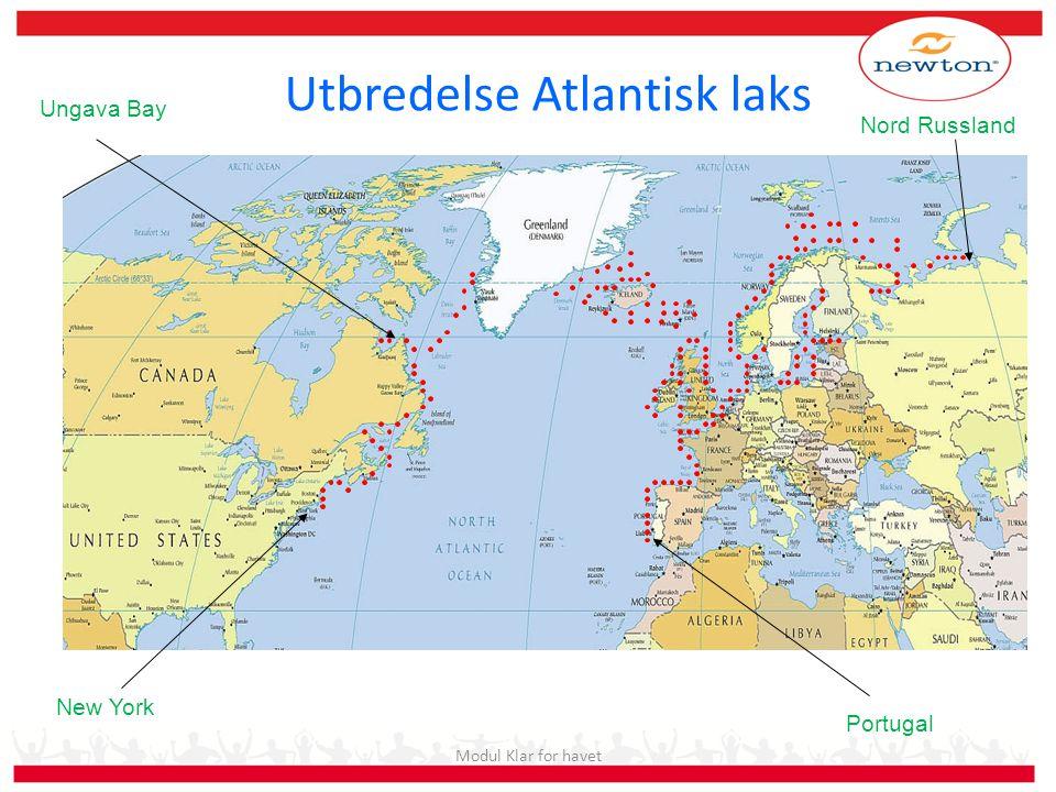 Utbredelse Atlantisk laks