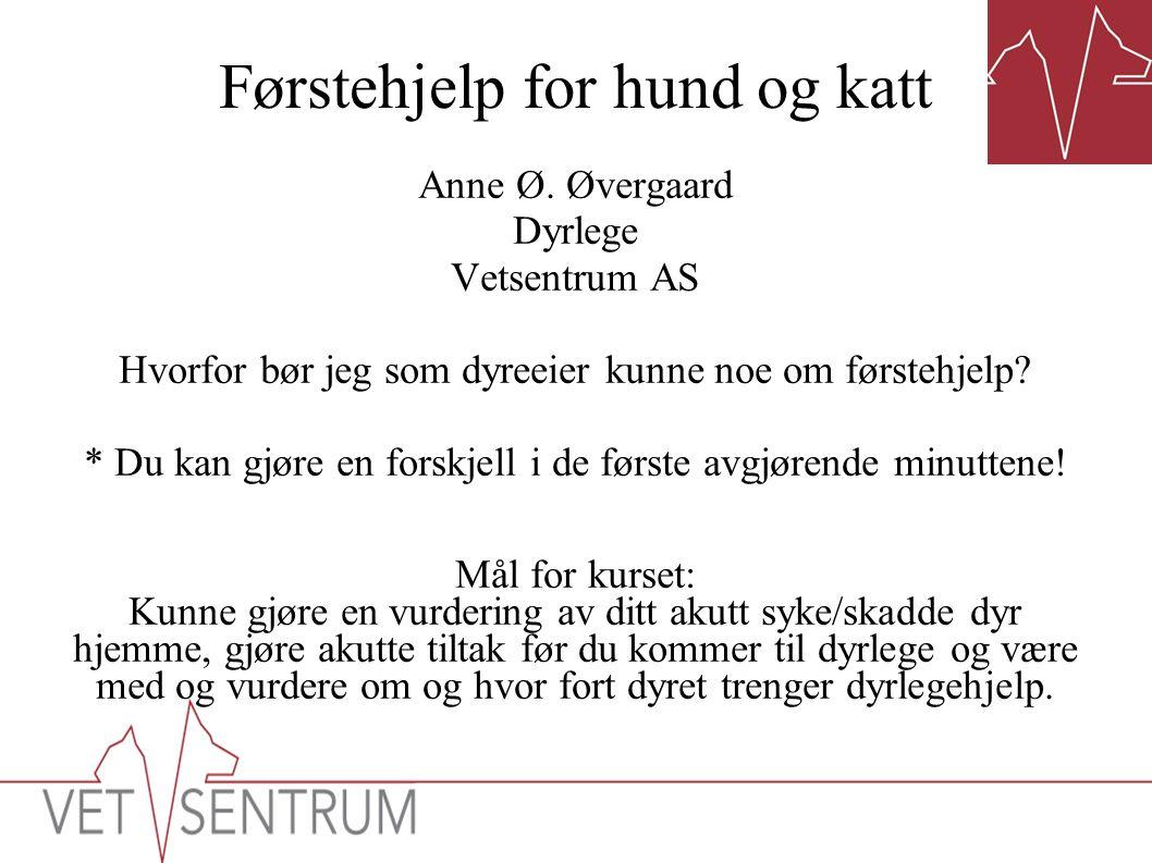 Førstehjelp for hund og katt