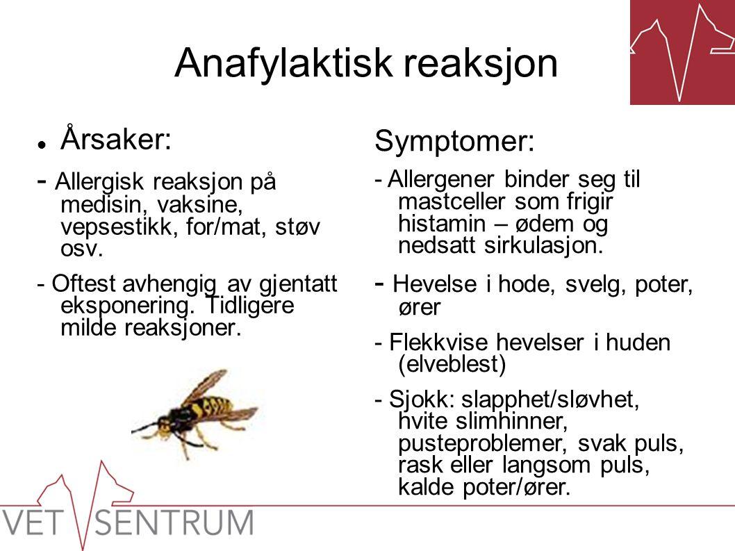 Anafylaktisk reaksjon