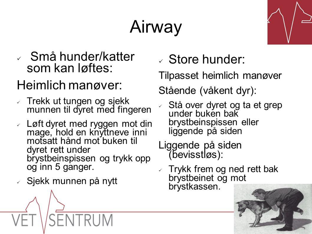 Airway Små hunder/katter som kan løftes: Store hunder: