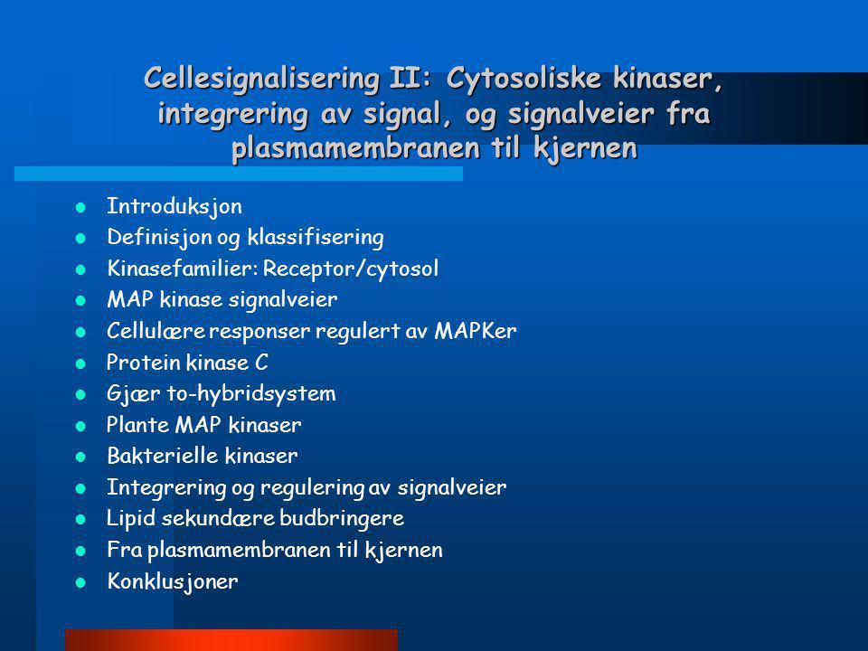 Cellesignalisering II: Cytosoliske kinaser, integrering av signal, og signalveier fra plasmamembranen til kjernen