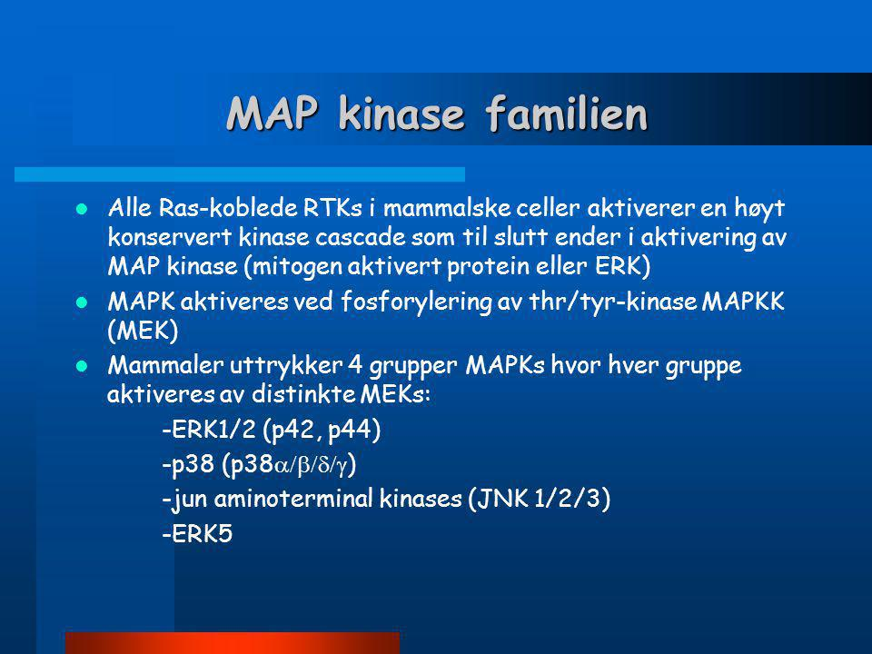 MAP kinase familien