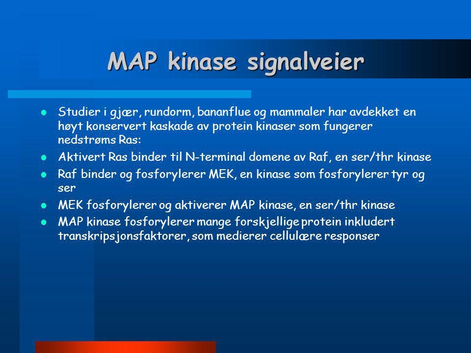 MAP kinase signalveier