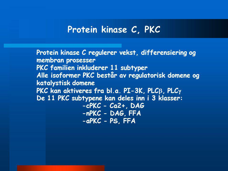 Protein kinase C, PKC Protein kinase C regulerer vekst, differensiering og membran prosesser. PKC familien inkluderer 11 subtyper.