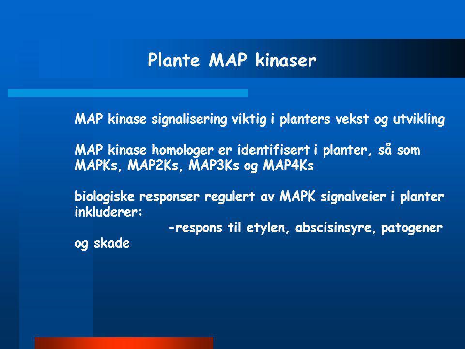 Plante MAP kinaser MAP kinase signalisering viktig i planters vekst og utvikling.