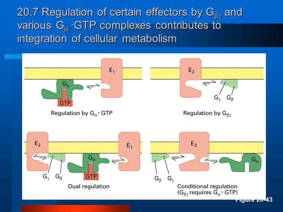 20.7 Regulation of certain effectors by G and various G ·GTP complexes contributes to integration of cellular metabolism