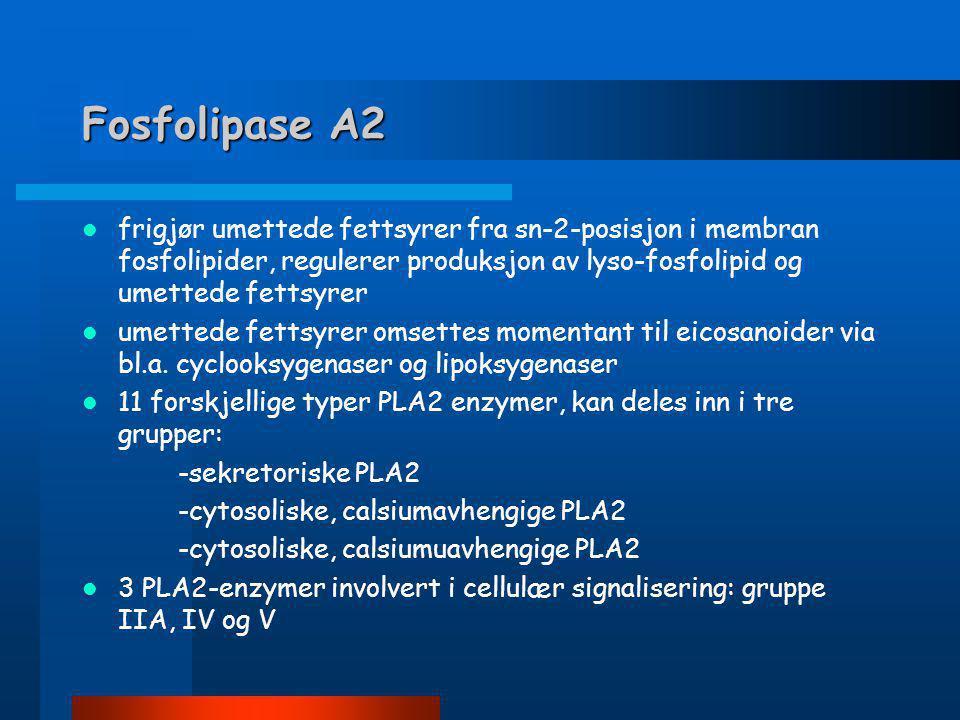 Fosfolipase A2 frigjør umettede fettsyrer fra sn-2-posisjon i membran fosfolipider, regulerer produksjon av lyso-fosfolipid og umettede fettsyrer.