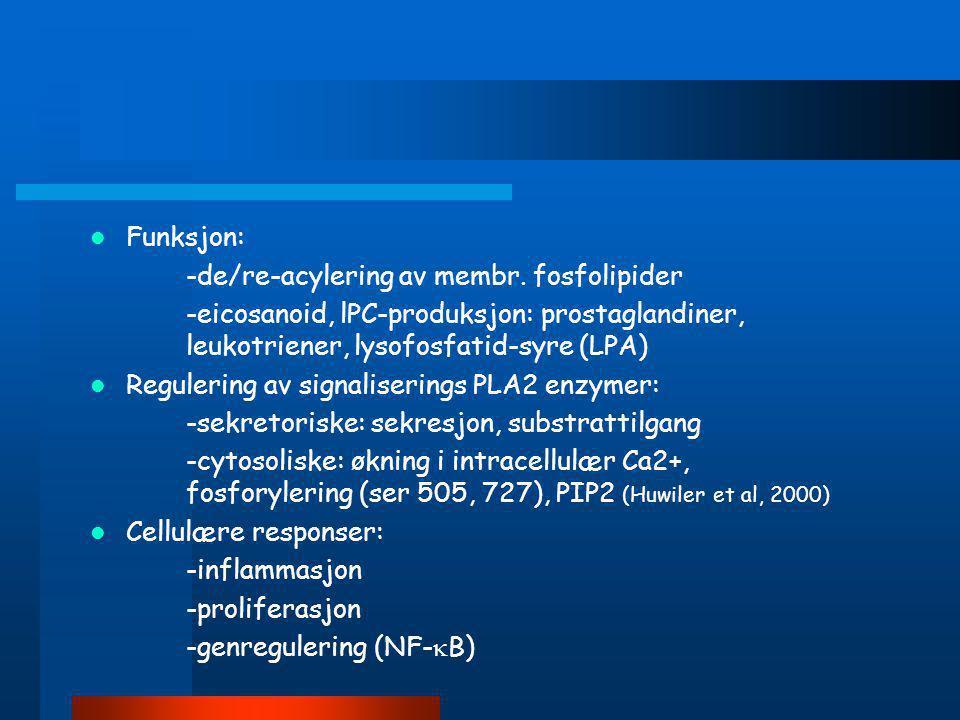 Funksjon: -de/re-acylering av membr. fosfolipider. -eicosanoid, lPC-produksjon: prostaglandiner, leukotriener, lysofosfatid-syre (LPA)