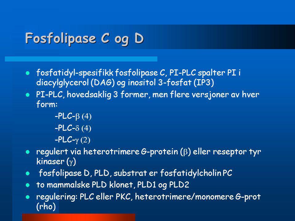 Fosfolipase C og D fosfatidyl-spesifikk fosfolipase C, PI-PLC spalter PI i diacylglycerol (DAG) og inositol 3-fosfat (IP3)