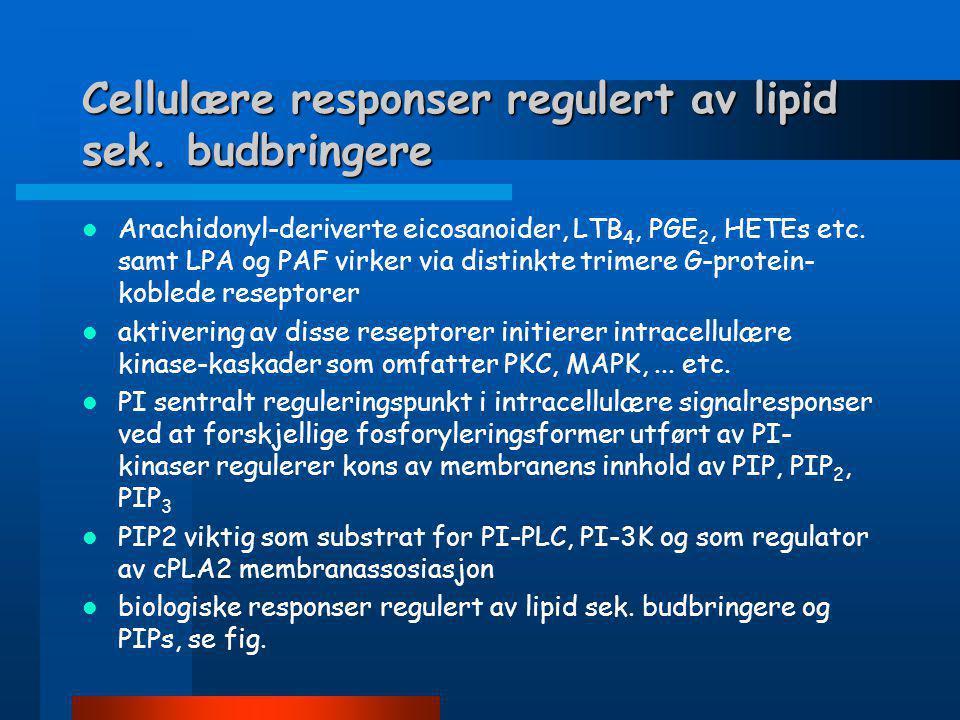 Cellulære responser regulert av lipid sek. budbringere