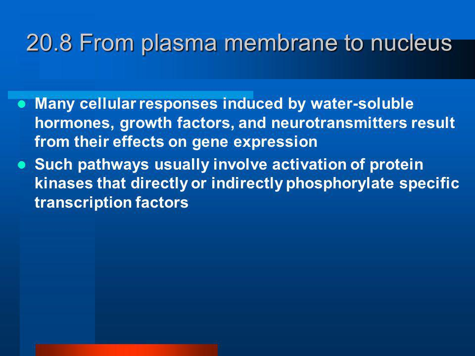 20.8 From plasma membrane to nucleus