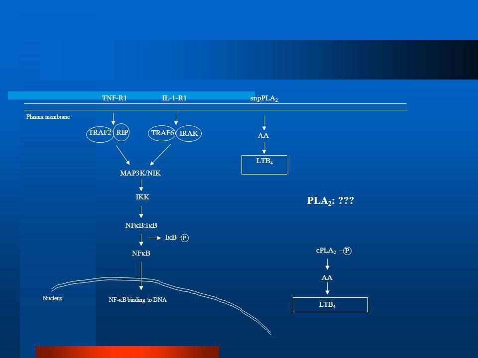 PLA2: TNF-R1 IL-1-R1 snpPLA2 AA LTB4 cPLA2 P TRAF2 RIP TRAF6 IRAK