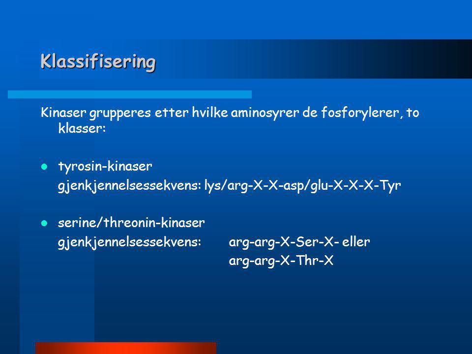 Klassifisering Kinaser grupperes etter hvilke aminosyrer de fosforylerer, to klasser: tyrosin-kinaser.