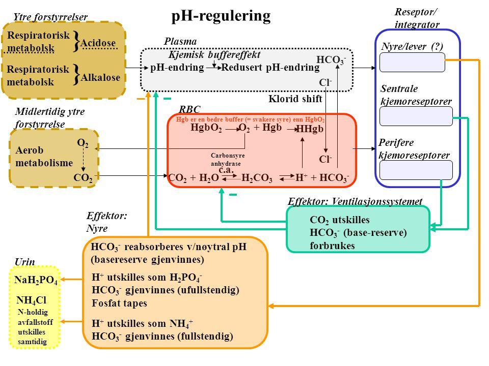 } pH-regulering Reseptor/ integrator Sentrale kjemoreseptorer Perifere