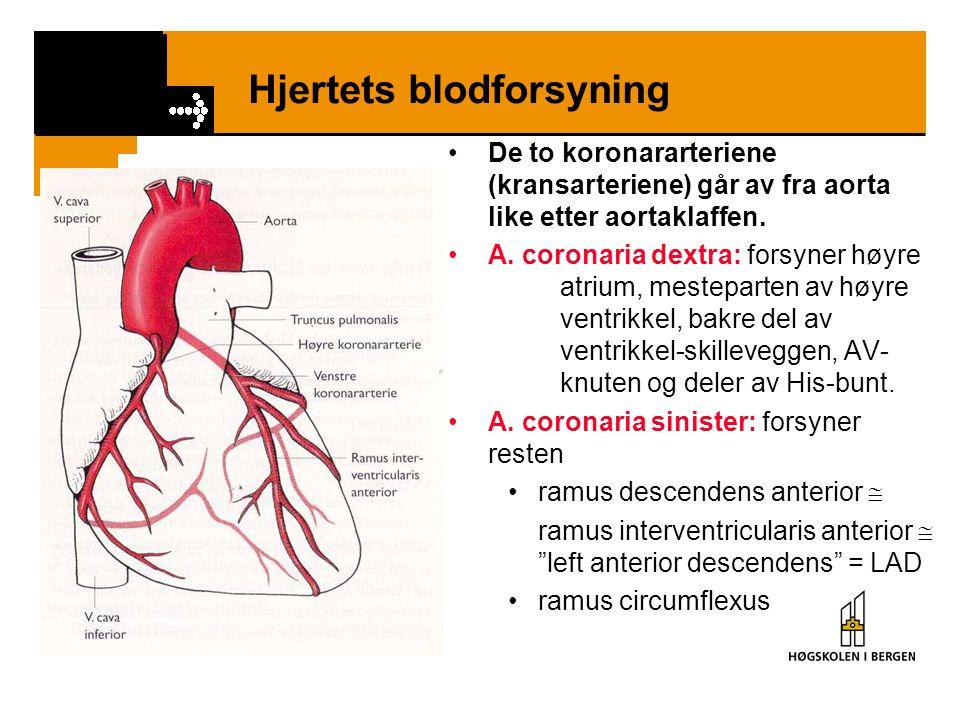 Hjertets blodforsyning