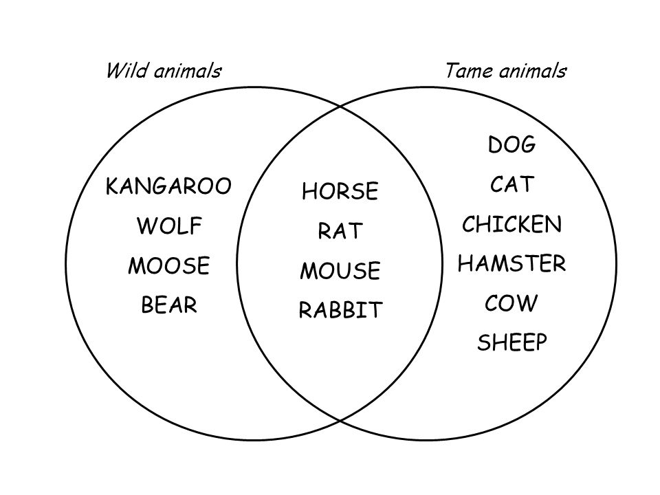 DOG CAT CHICKEN KANGAROO HORSE WOLF HAMSTER RAT MOOSE COW MOUSE BEAR