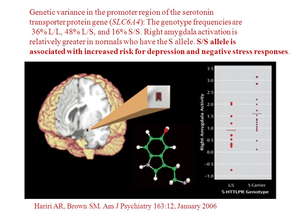 Genetic variance in the promoter region of the serotonin