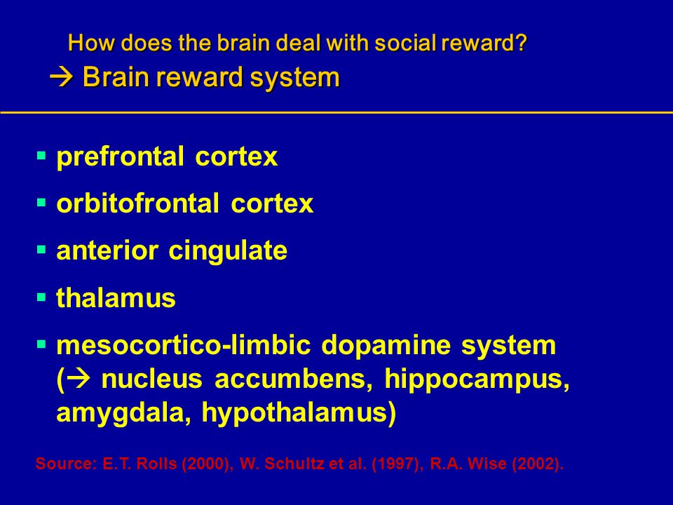How does the brain deal with social reward  Brain reward system