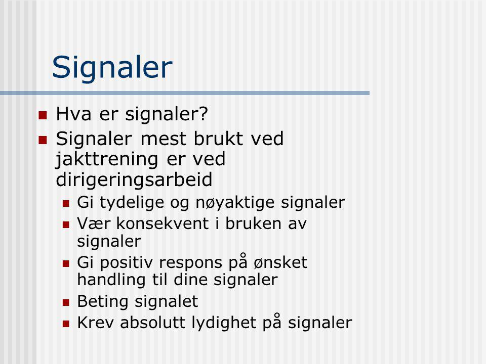 Signaler Hva er signaler