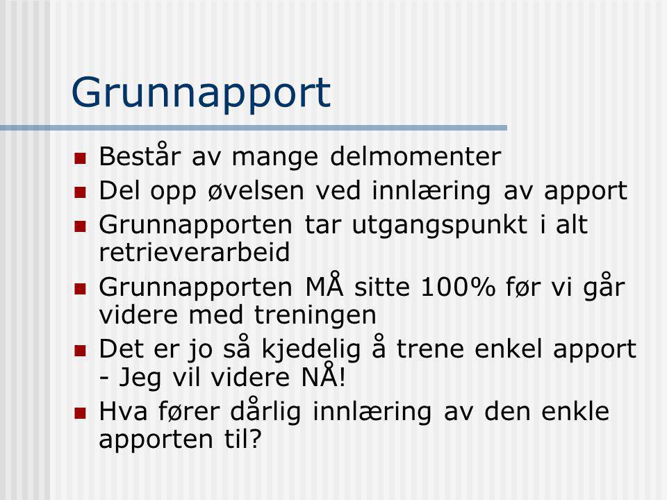 Grunnapport Består av mange delmomenter