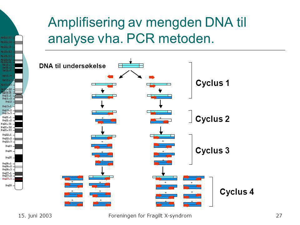 Amplifisering av mengden DNA til analyse vha. PCR metoden.