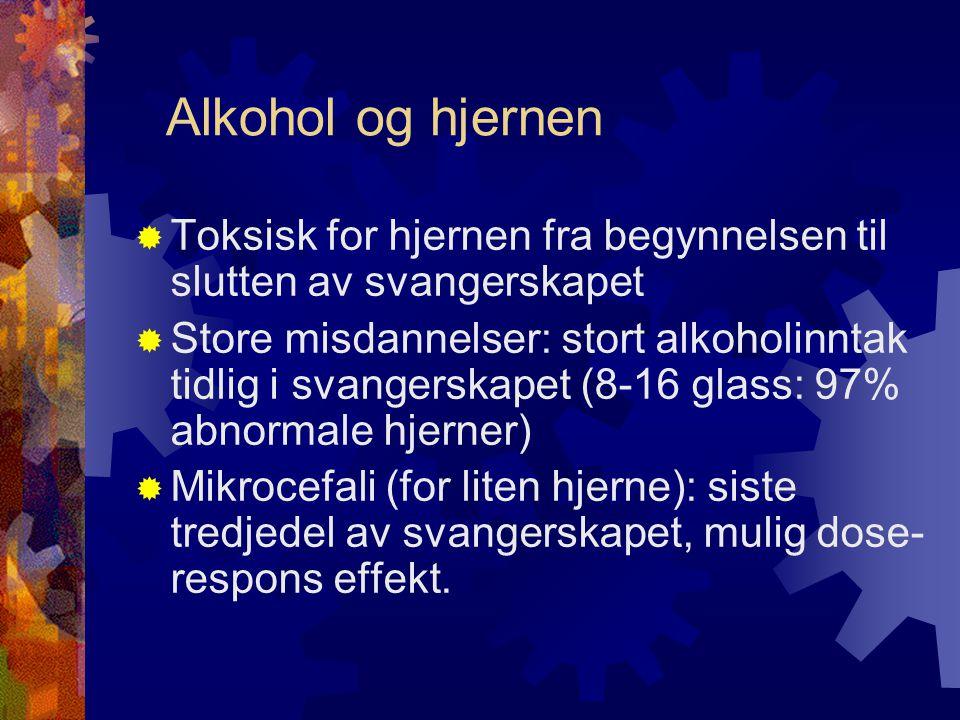 Alkohol og hjernen Toksisk for hjernen fra begynnelsen til slutten av svangerskapet.