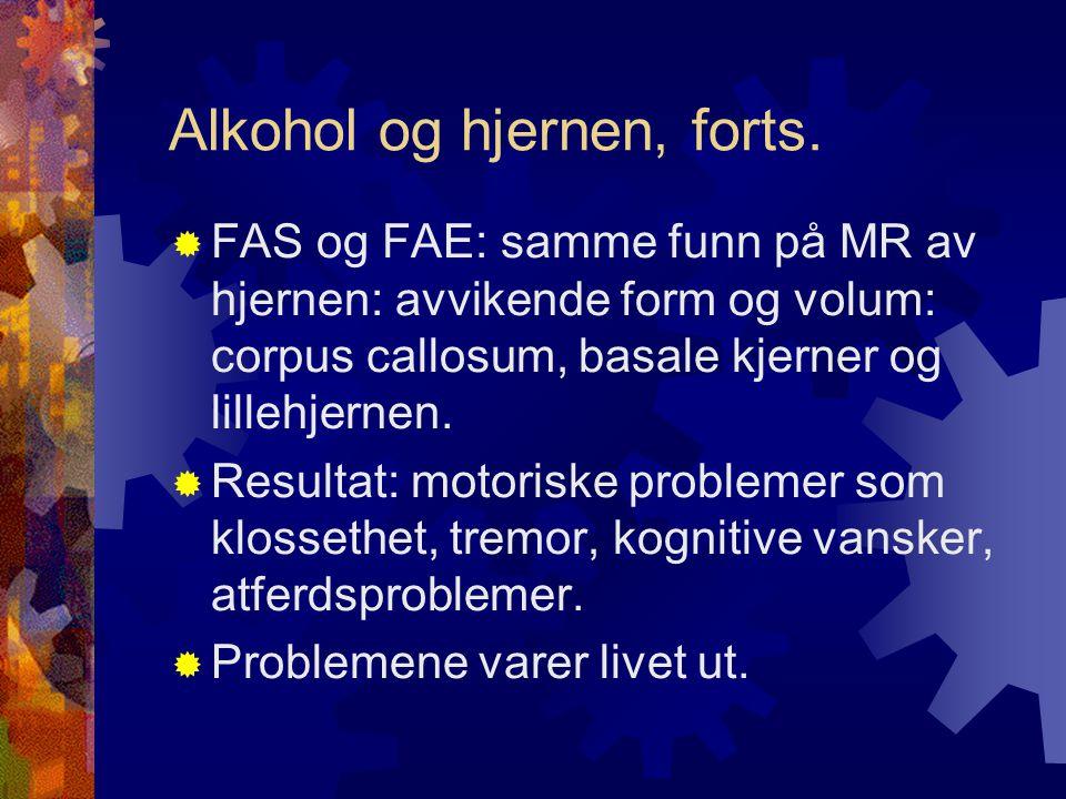 Alkohol og hjernen, forts.