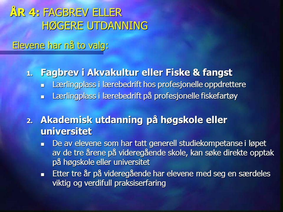 ÅR 4: FAGBREV ELLER HØGERE UTDANNING
