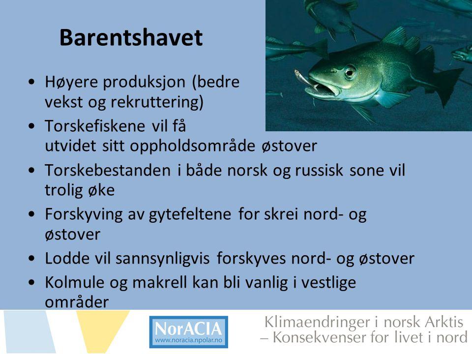 Barentshavet Høyere produksjon (bedre vekst og rekruttering)