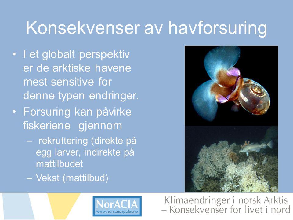 Konsekvenser av havforsuring