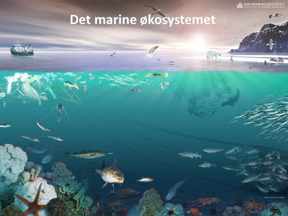Det marine økosystemet