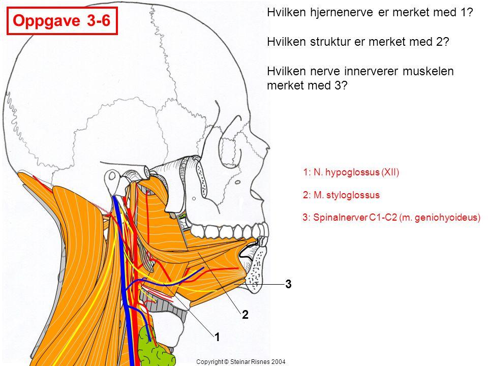 Oppgave 3-6 Hvilken hjernenerve er merket med 1