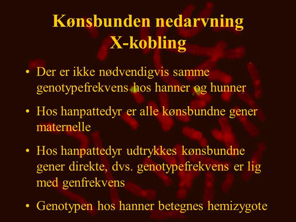 Kønsbunden nedarvning X-kobling